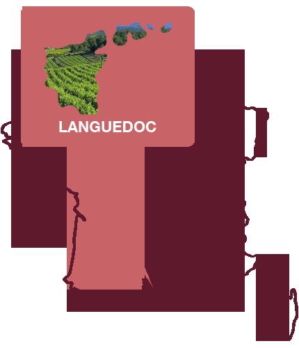 wijnregio languedoc