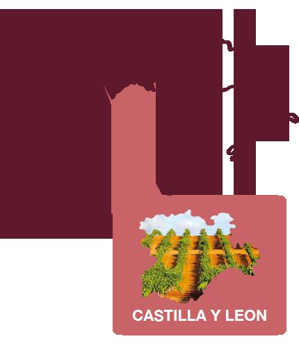 Spaanse wijnen wijnregio leon
